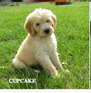 Yes, cupcake is the cutest name for this puppy!!