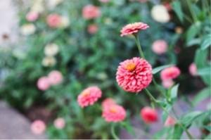 Film Flowers